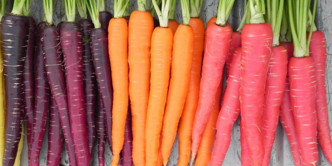 Ρώτα για τα … καρότα!  - Κεντρική Εικόνα